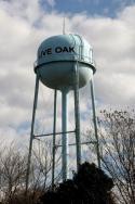 live-oak-78148 78233